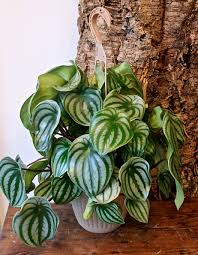 pictures of small house plants