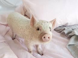 a great set of bedsheets can improve sleep quality u2014 here u0027s how