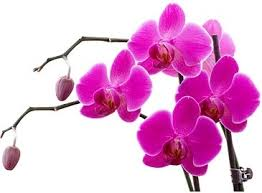 flower orchid orchid flower images free stock photos 11 264 free stock