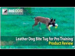 belgian sheepdog dogs 101 shepherd canine training videos