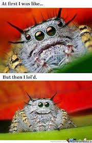 Cute Spider Meme - happy spider o 147423 jpg 420纓651 cute funny quotes