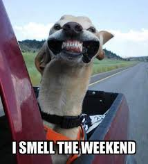 Funny Weekend Meme - i smell the weekend