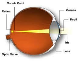 Anatomy Of The Eye Anatomy Of The Eye Eye Medical Center