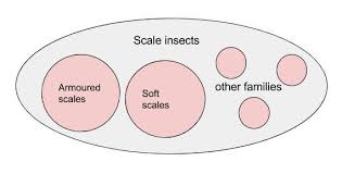House Plants Diseases - scale insects house plant diseases my house plants