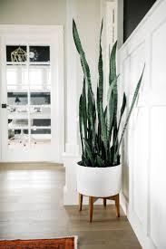 best indoor plants u2014 kelly boyd design montreal based interior