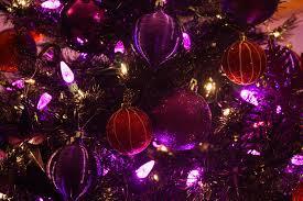 free images purple petal decor tree