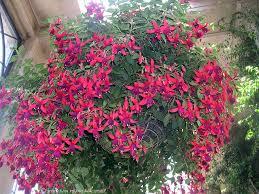 142 best hummingbird garden images on pinterest butterflies