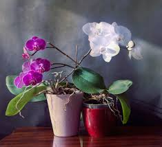 20 houseplants to clear toxins from the air in your home care2