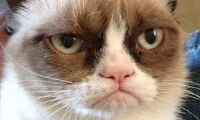 Meme Generator Grumpy Cat - amazing depressed meme generator grumpy cat being groomed to star