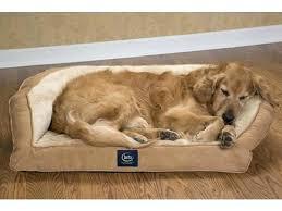dog bed costco dog sofa bed dog bed costco canada u2013 startupselfie co