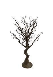 manzanita tree manzanita trees eiffel towers rent 4