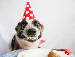best 25 happy birthday dog meme ideas on pinterest funny