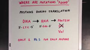 the effects of mutations video khan academy