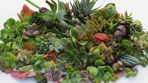 Succulent And Cacti Pictures Gallery Garden Design Download Types Of Succulents Garden Design