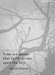 the 25 best tree quotes ideas on religious quotes