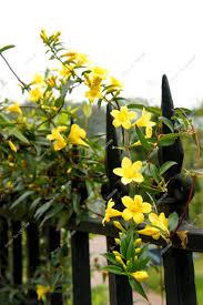 Cheap Flower Seeds - online get cheap flowers jasmine aliexpress com alibaba group