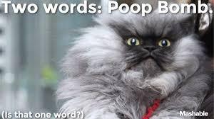Colonel Meow Memes - colonel meow danielsternklar com