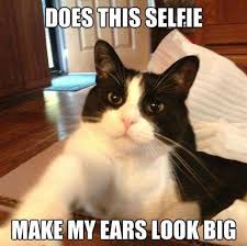 Memes Cats - 9 magnificent meme monday cat memes petcentric by purina