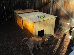 Ancient Pathways Survival School LLC DIY Dog House Plans