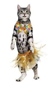 funny dog costumes halloween 39 best pets in costume images on pinterest dog cat pet