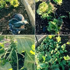 stunning pictures of vegetable garden images garden and