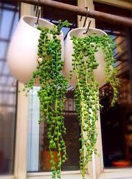 si e suspendu ikea succulentes ikea pots suspendus pots suspendus de gouttelettes d eau