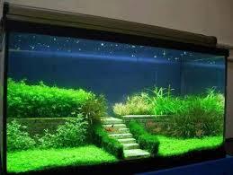 aquarium decoration ideas freshwater aquarium decoration idea apk download free lifestyle app for