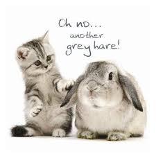 tabby kitten rabbit birthday card grey hares cat greeting