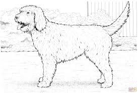 cockapoo dog coloring page free printable coloring pages