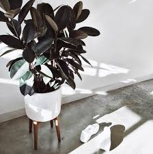 green notes minimal interiors style by monochrome concrete