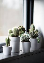 cactus home decor 20 amazing ways to mix a cactus into your home decor the art in life