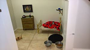 this chihuahua has his own harry potter room under the stairs this chihuahua has his own harry potter room under the stairs