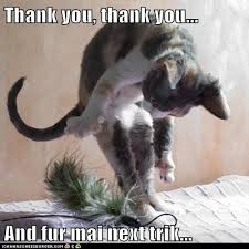 Thank You Meme Funny - funny animal thank you meme alex gartenfeld