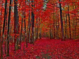 imagenes de otoño para fondo de escritorio resultado de imagen de imagenes para fondo de pantalla cuadros