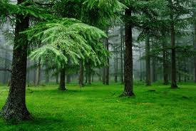 green forest trees nature brought to you by nzflorists co nz
