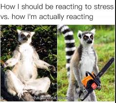 Lemur Meme - lemur meme bro meme best of the funny meme