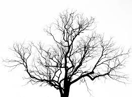 dead tree without leaves stock photo colourbox
