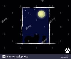 cat in the looking at the moon and stock photo