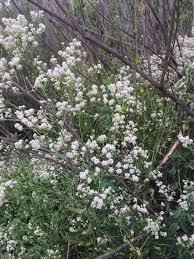 Flowers Salinas - the salinas river and el nino 2016 buy real estate in paso