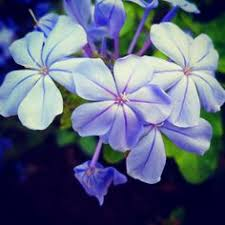 top 163 most beautiful u0026 popular different types of flowers for