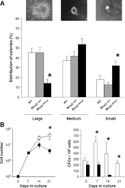 hematopoietic dysfunction in a mouse model for fanconi anemia
