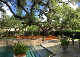 United Backyard Cutters Bayou Tree Service New Orleans U0026 Baton Rouge Arborists