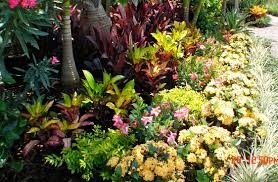 tropical garden ideas landscape design ideas melbourne u0026 melbourne beach tropical