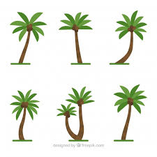 coconut trees vectors photos and psd files free download