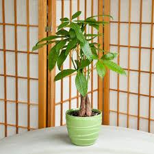 12 Best Plants That Can by Plant Safe Plant Safe Pet Friendly House Plants 15 Indoor Plants