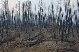 Prince George Bc Wildfire by Bc Wildfires Archives Houston Today