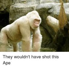 Ape Meme - they wouldn t have shot this ape dank meme on me me