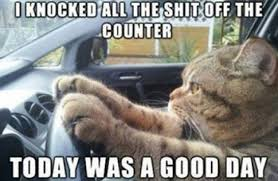 Sweetest Day Meme - 10 funny cat memes 2015 cute cat pictures photos pics