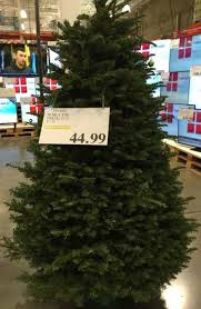 costco christmas trees 2014 costco insider
