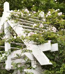 Plants For Pergolas by Vines For Trellises Arbors Patio Roofs U0026 Gazebos